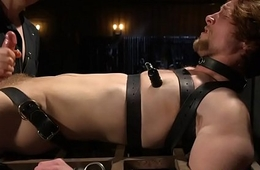 Edging bdsm sub tied up for cocksucking